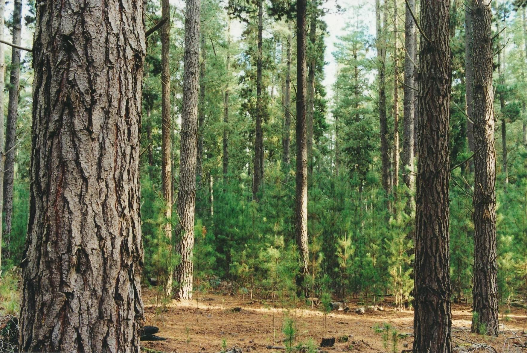 PSA Mature Plantation