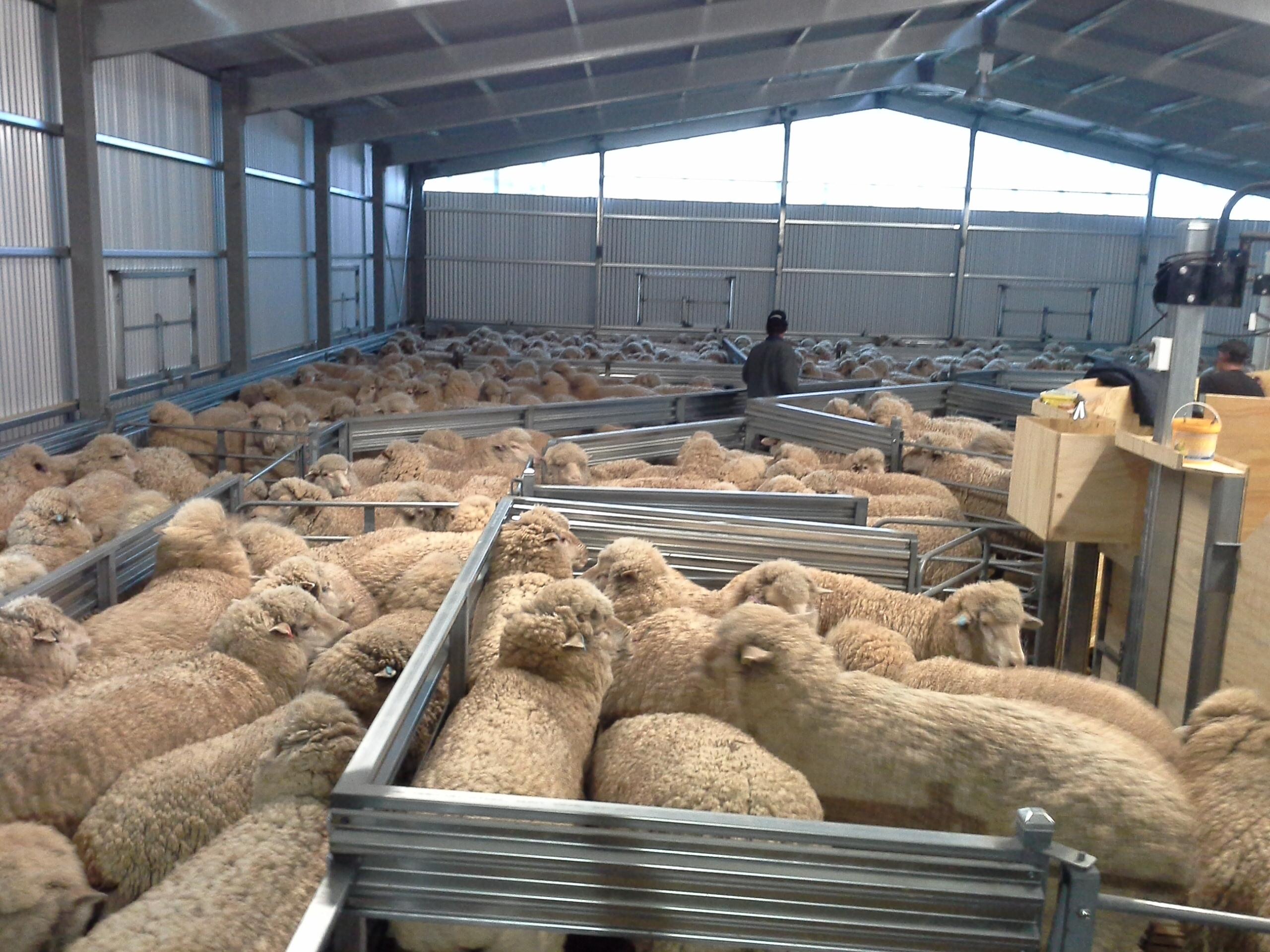 shearing-shed-2