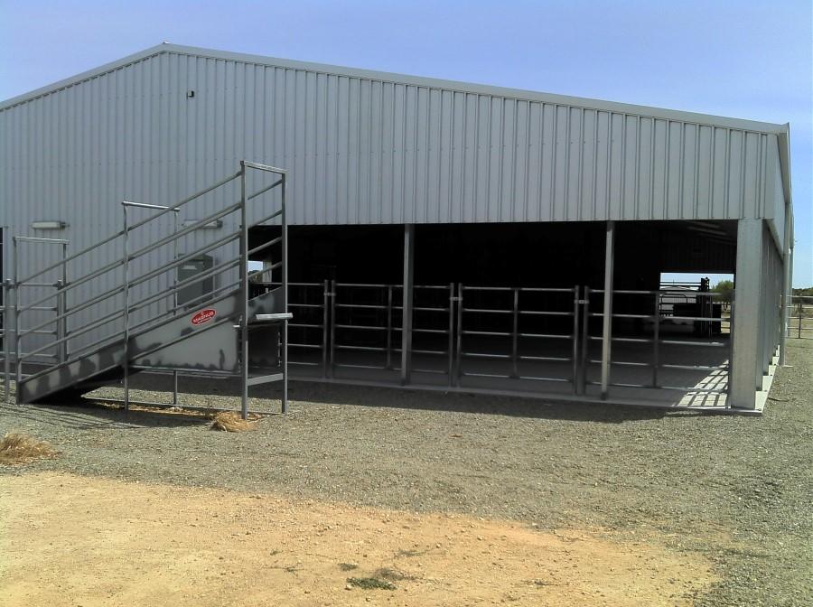 cattle-complex-2-custom